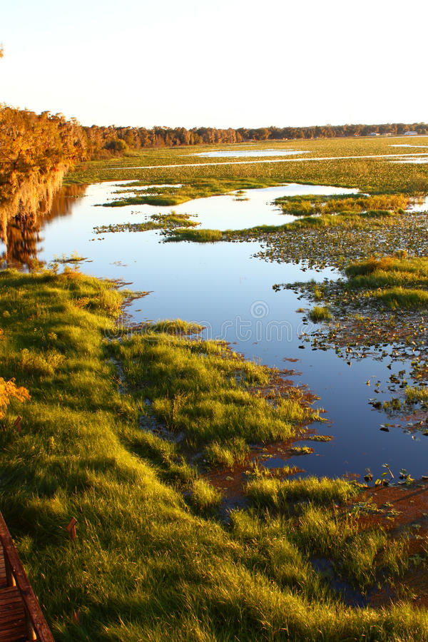 Lake Arbuckle - Florida royalty free stock image