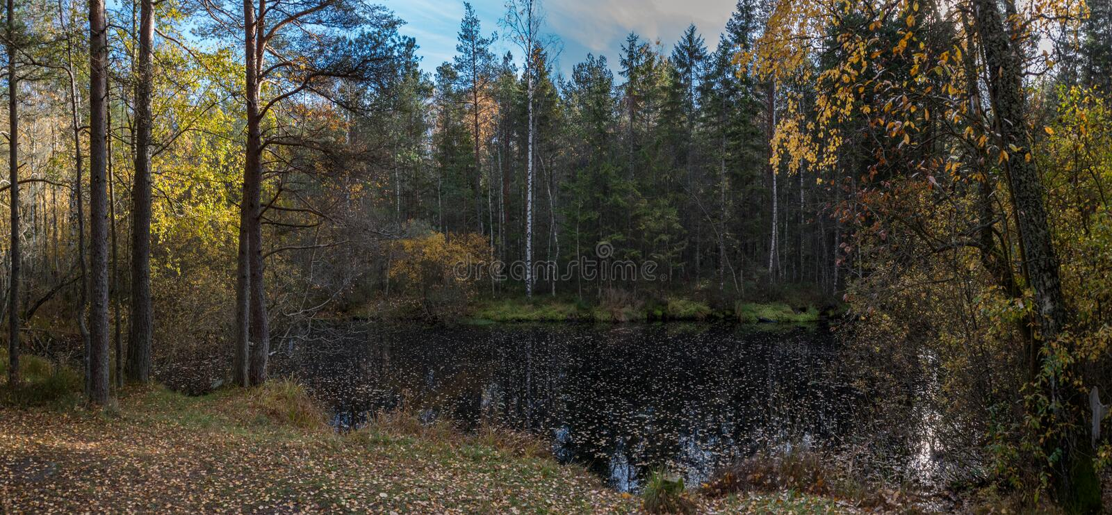 Lake in autumn forest royalty free stock photos