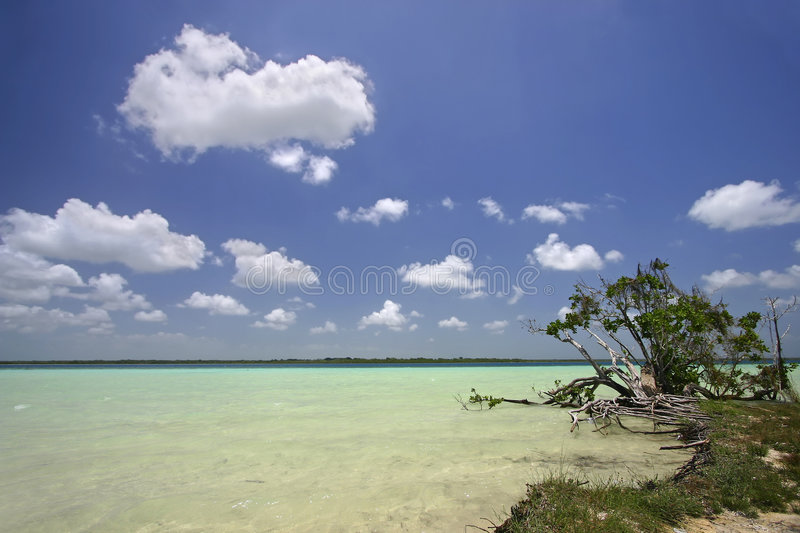 Lake Bacalar, Quintana Roo, Mexico. By the shores of the white sandy-bottomed, clear, turquoise, freshwater lake of Lake Bacalar royalty free stock photos