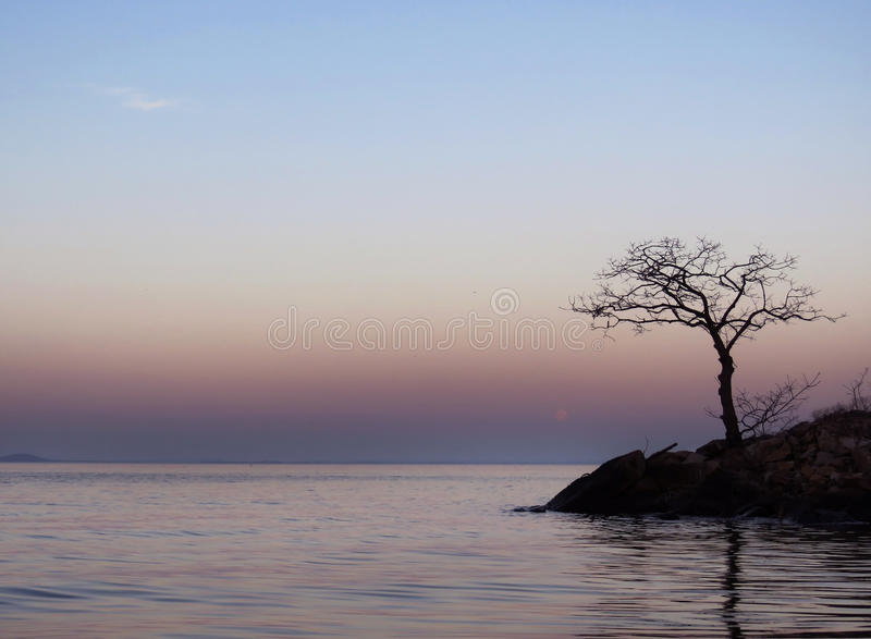 Lake Background with lone tree at dawn. Small waves pink and blue lake with lone tree , dawn or dusk, early morning or late evening landscape, seascape image stock image