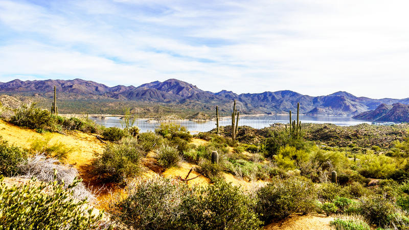Lake Bartlett surrounded by the mountains and many Saguaro and other cacti in the desert landscape of Arizona. Lake Bartlett surrounded by the mountains and many royalty free stock photo