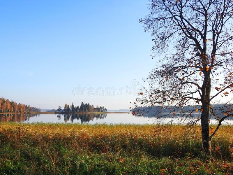Lake and beautiful plants, Lithuania stock photos