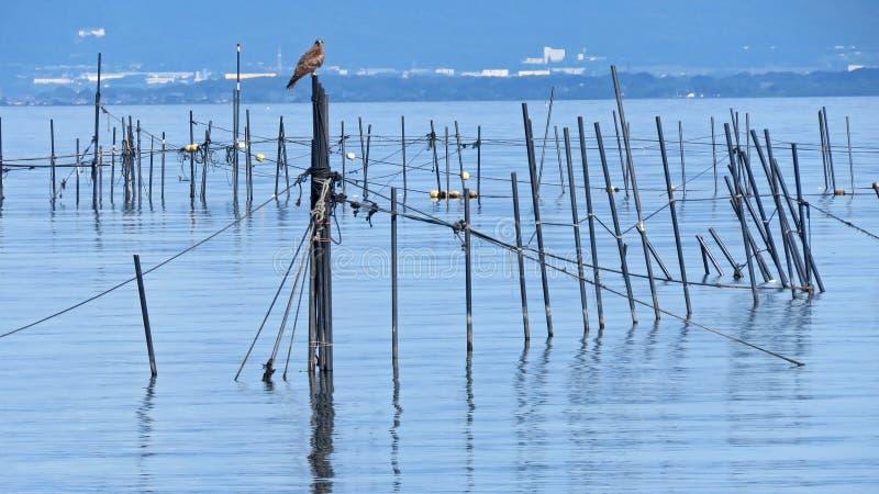 Lake Biwa i Japan royaltyfria foton