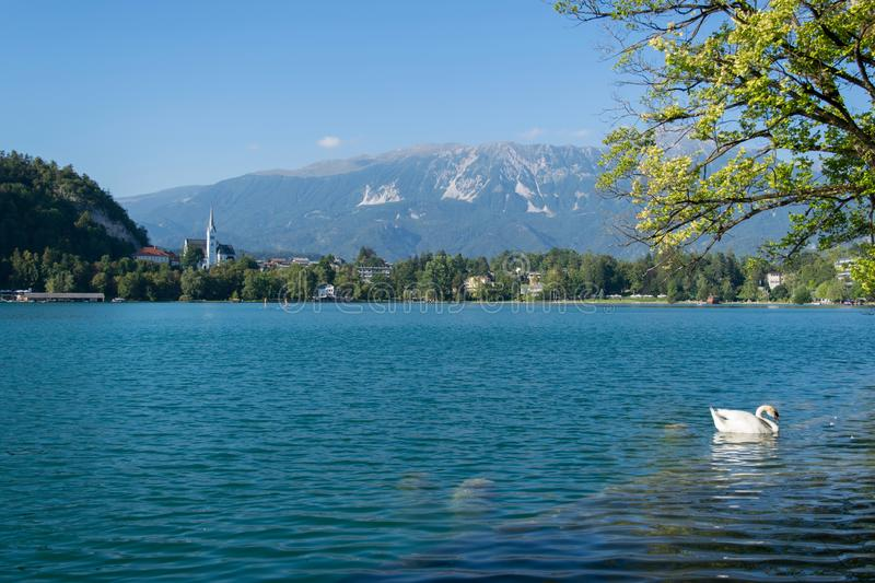 Lake Bled Slovenia. Beautiful mountain lake with small Pilgrimage Church stock images