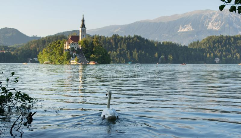 Lake Bled with swan, Slovenia, stock photo