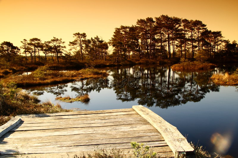 Download Lake in a bog in Estonia stock photo. Image of pinetrees - 5046854