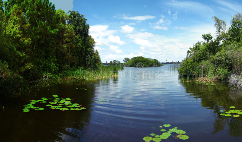 Lake at Boyd Hill in Florida. View of tranquil lake at Boyd hill in St Petersburg, Florida royalty free stock photo