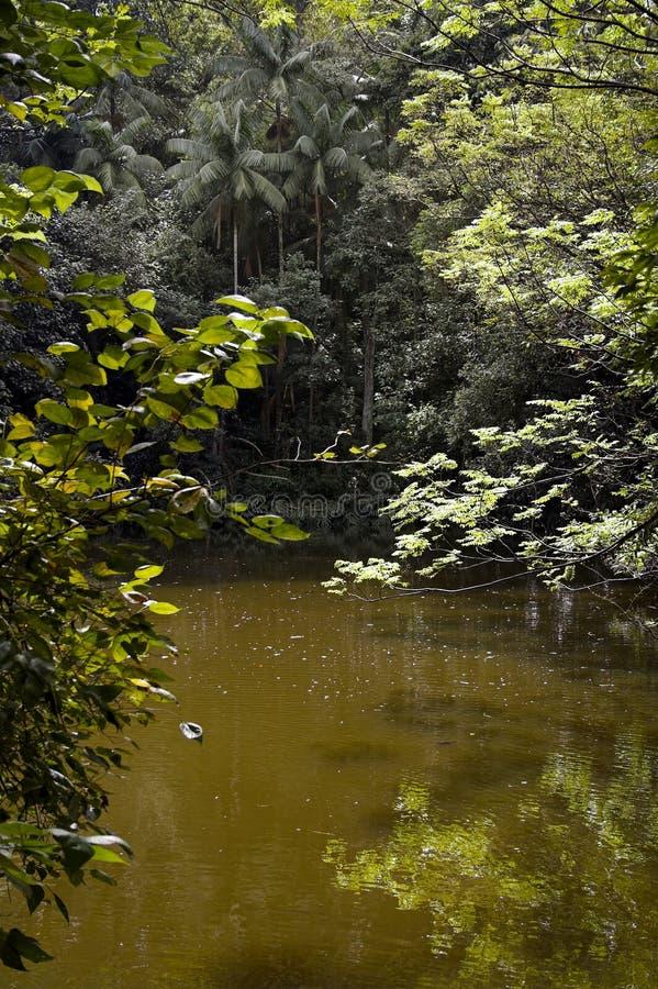 Lake in Burle Marx Park royalty free stock photos