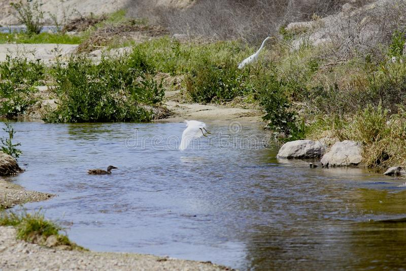 Download Lake California Birds Stock Photo - Image: 39285803