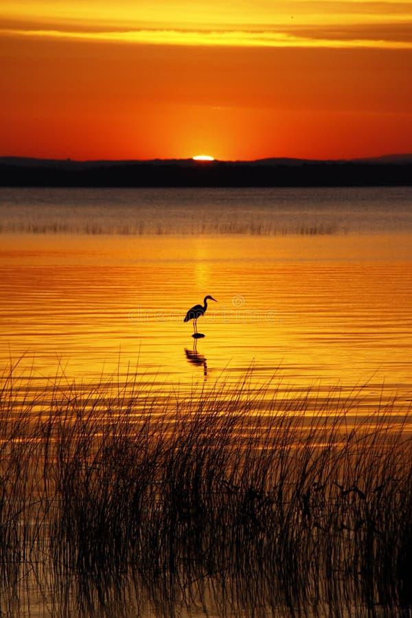 Free Lake Champlain Bird And Golden Sunrise Royalty Free Stock Photo - 18434415