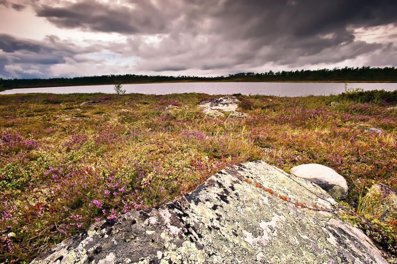 Lake and cloudscape. Scenic view of picturesque lake under dark cloudscape with heather and rock in foreground stock image