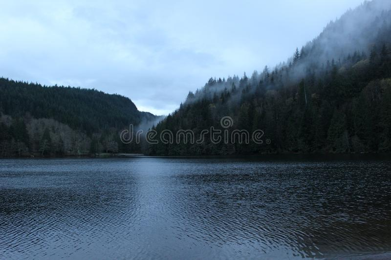 Lake Coast Covered With Evergreen Forest Free Public Domain Cc0 Image