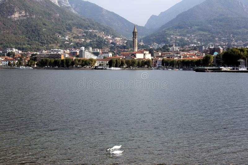 Lake Como waterfront, Lecco, Italy. Lake Como waterfront, two swans on the forefront, view across the bay, Lecco/Italy - September 17, 2012 royalty free stock photography