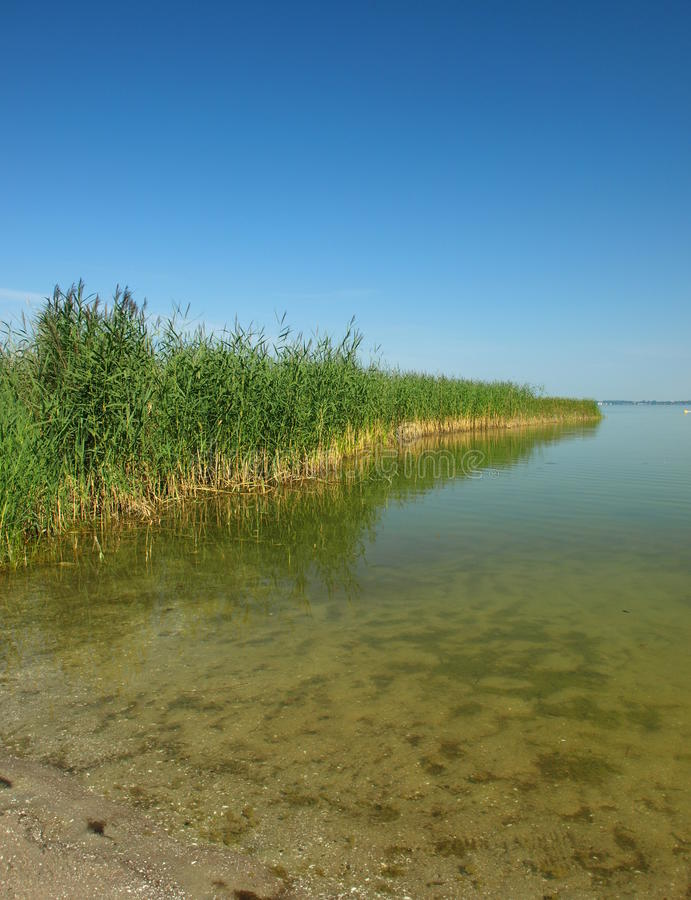 Lake covered with reed stock photos