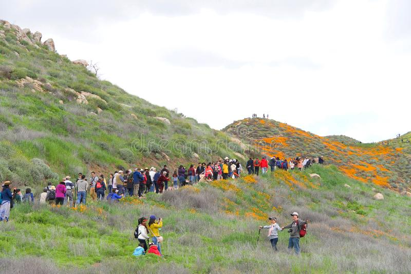 Thousands of people climbing the trail to view wildflower super bloom royalty free stock image