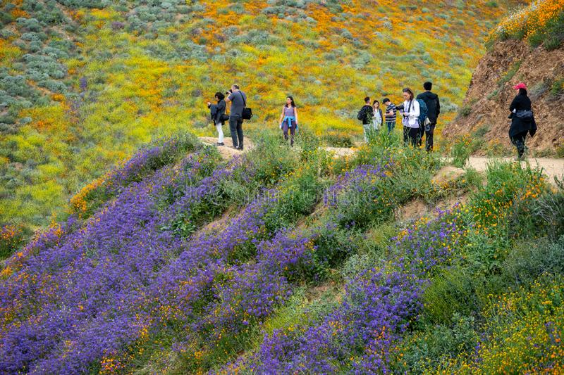 Lake Elsinore, California - March 20, 2019: Tourists take photos and walk the trail at Walker Canyon, admiring the wildflowers and. Poppies during the royalty free stock image