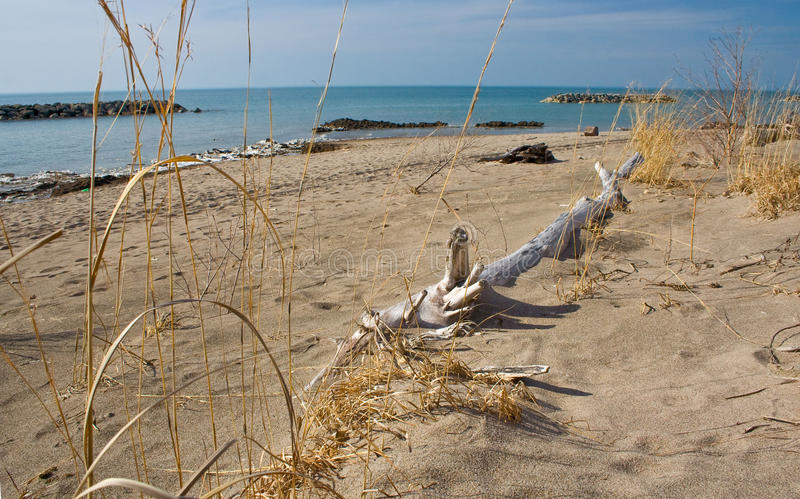 Download Lake Erie shoreline stock photo. Image of attraction - 13902816