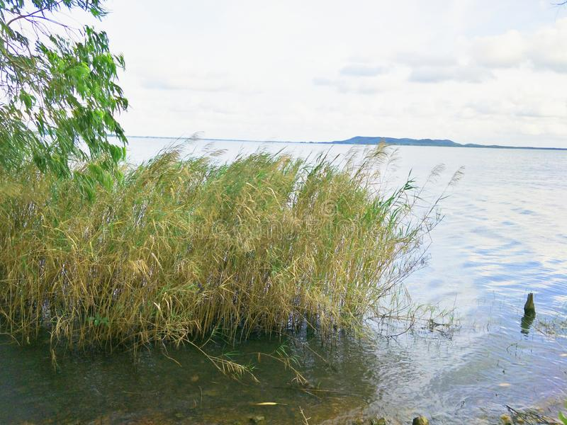 Lake in the evening. A lake is an area filled with water, localized in a basin, that is surrounded by land, apart from any river or other outlet that serves to stock photos