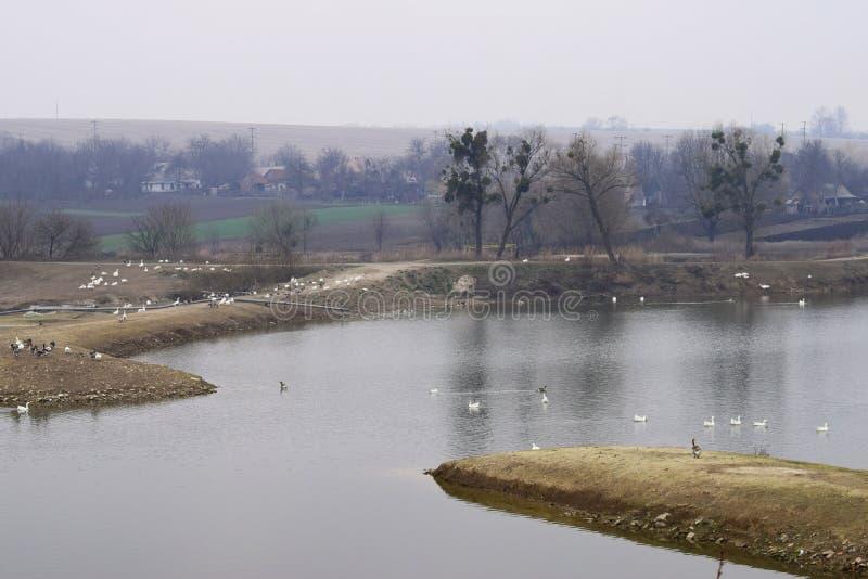 Lake&farm στοκ εικόνες