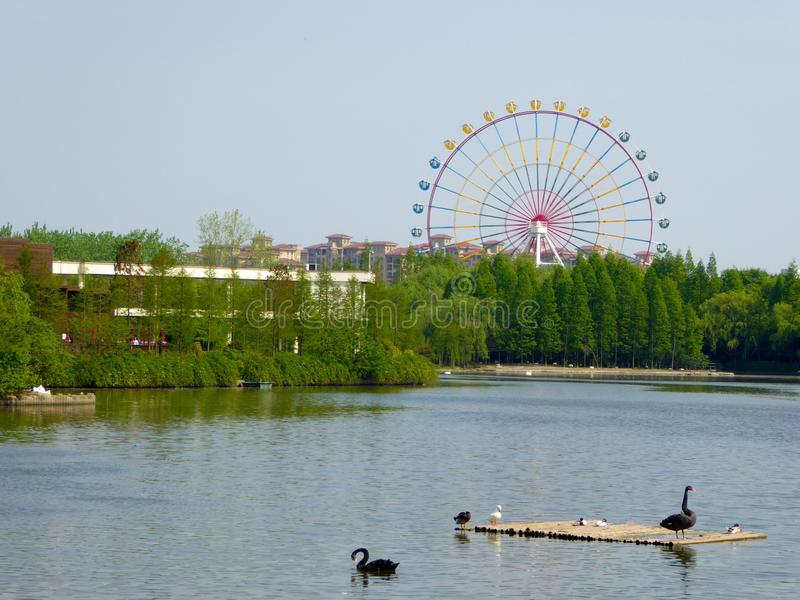 A lake with a Ferris wheel background at Shanghai wild animal park. China on a sunny day royalty free stock image