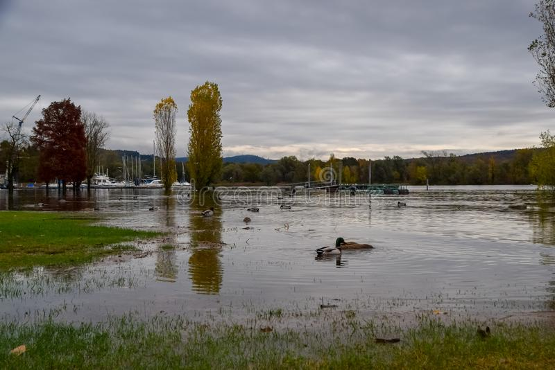 Lake flooding. Some foreshortenings portrayed after the flood of Lake Maggiore stock photography