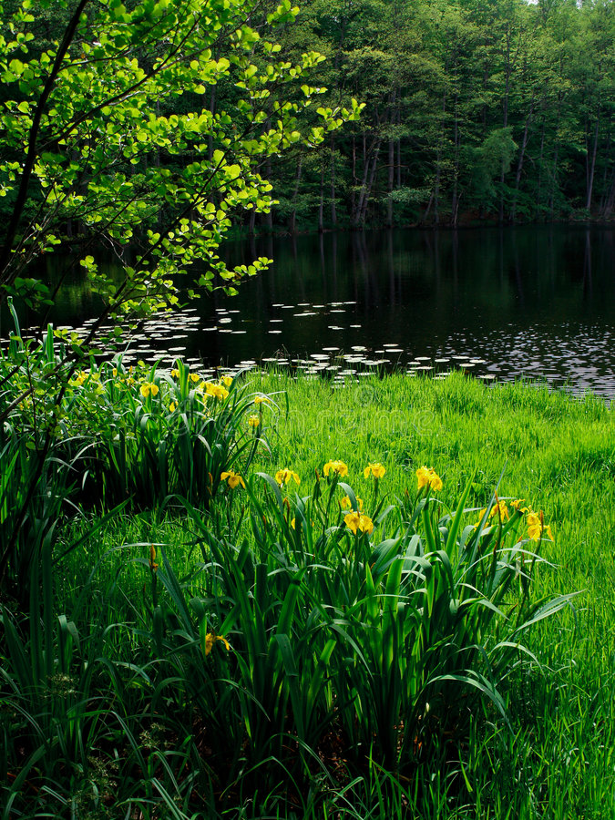 Download Lake and flowers stock image. Image of scenery, natural - 7737745