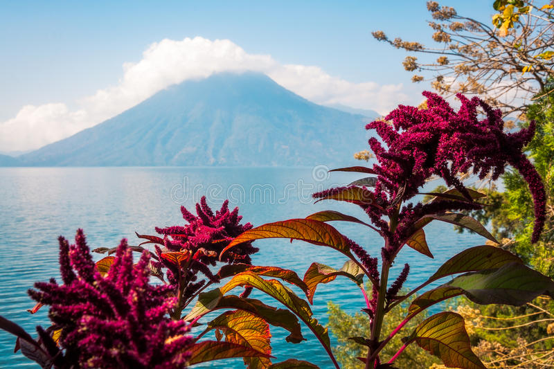 Download Lake, Flowers And Volcano In Guatemala Stock Photo - Image of resort, colorful: 97941114