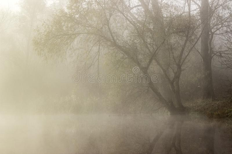 Lake with fog. Autumn landscape of lake, trees and nature in fog royalty free stock photo