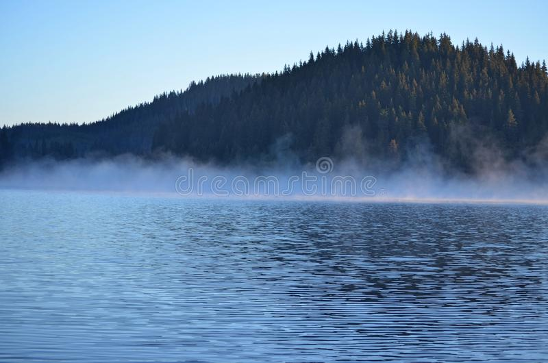 Lake at the foot of the pine forest royalty free stock photos