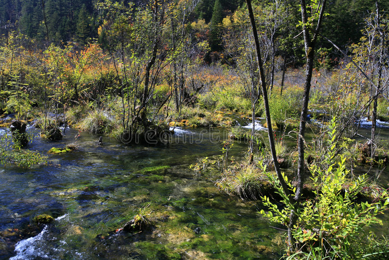 lake forest obraz royalty free