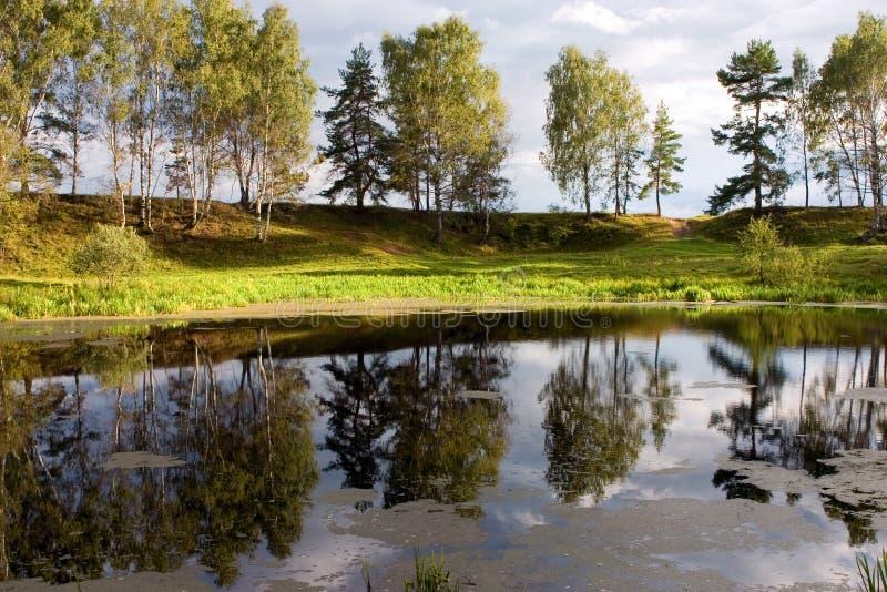 lake forest zdjęcie royalty free