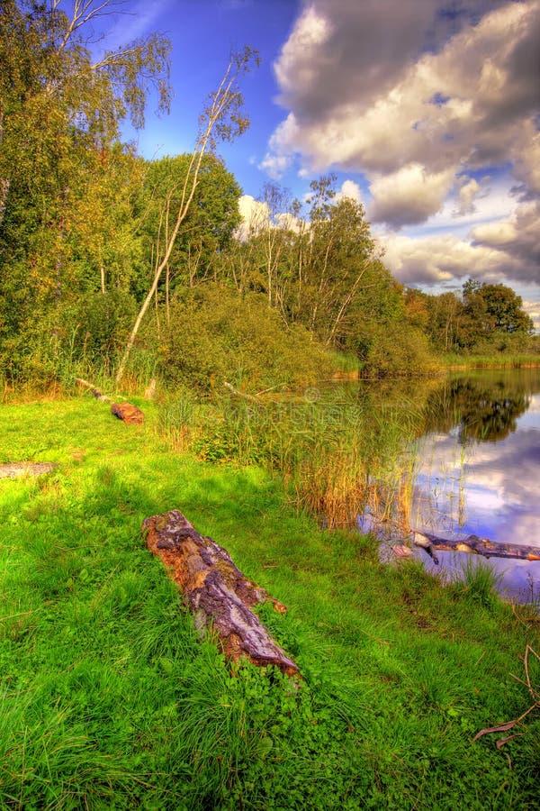 lake forest obraz stock