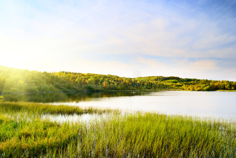 Download Lake in forest stock photo. Image of grass, blue, taiga - 7251794
