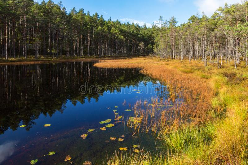 Lake in the forest in autumn royalty free stock photography