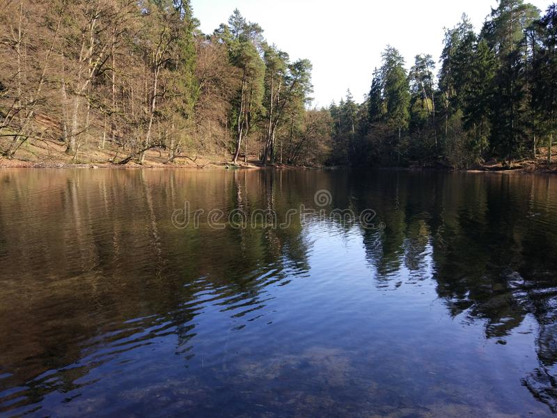 Lake in the Forest royalty free stock image