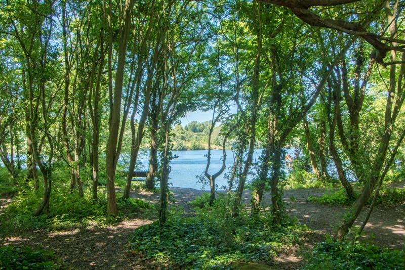 Lake through the forest stock photos