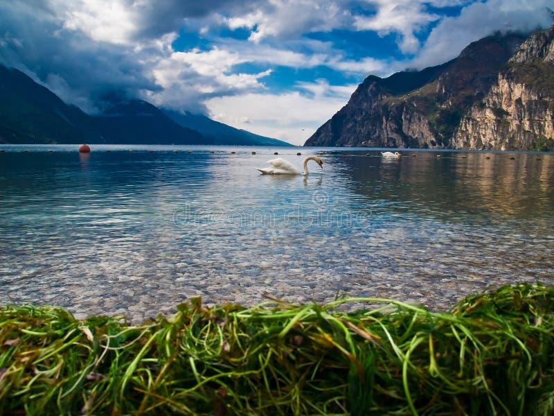 Lake Garda and his swan royalty free stock photos