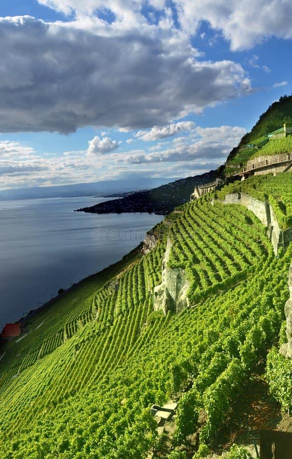 Download Lake Geneva stock image. Image of green, atmosphere, geneva - 26958827