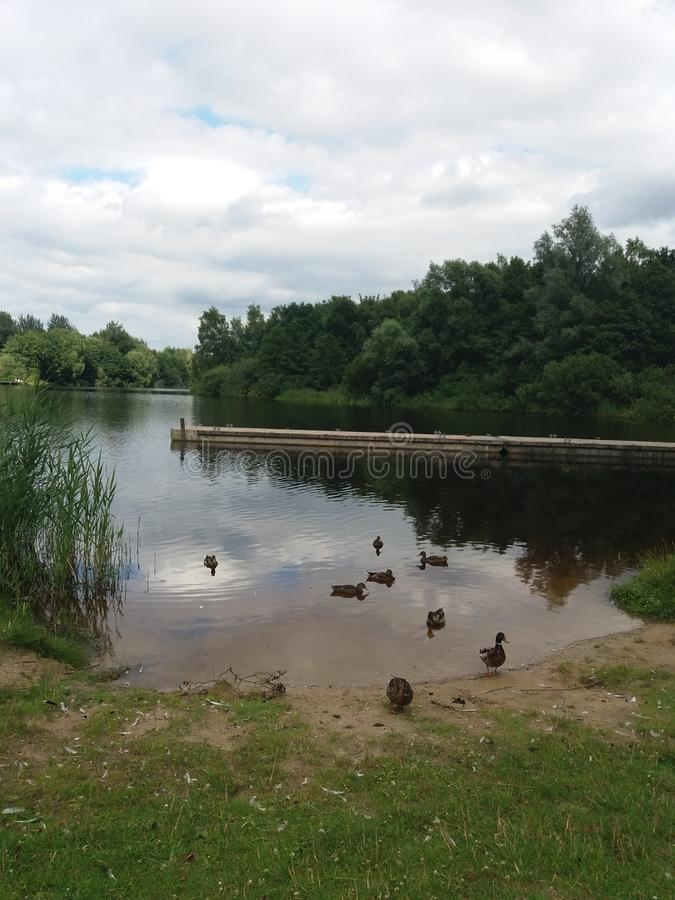 Lake in Germany, weichelsee royalty free stock photos