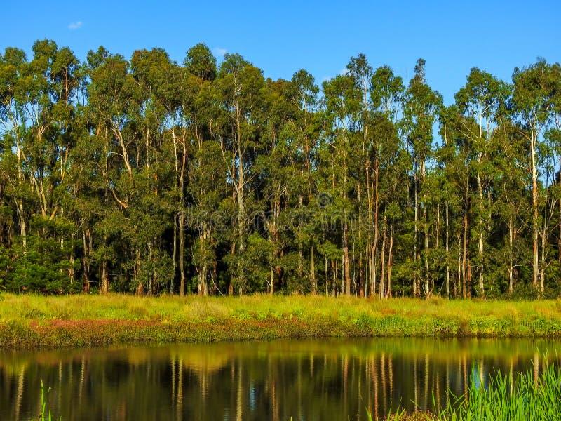 Lake in Glen Waverley. Victoria, Australia stock photography