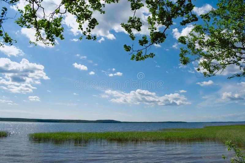 Lake with grass growing in the water stock images