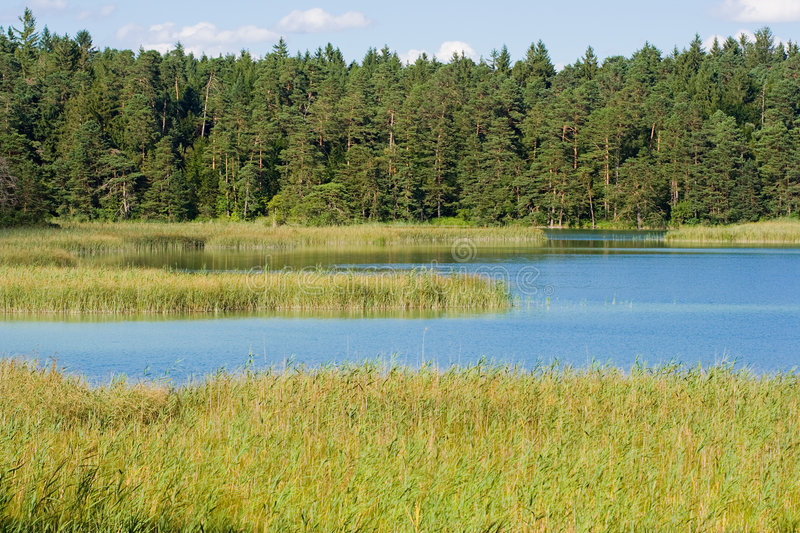 Download Lake with high grass stock image. Image of high, tourism - 7203293