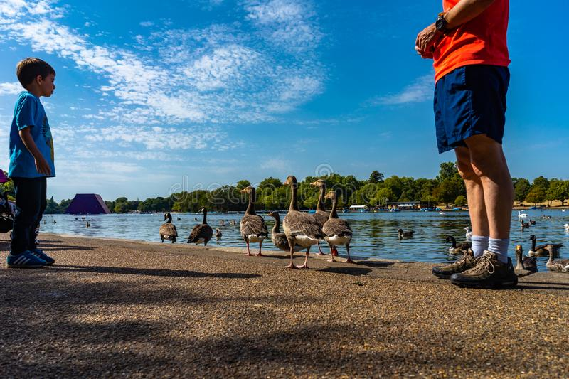 Lake Hyde Park in London, England, UK stock photography