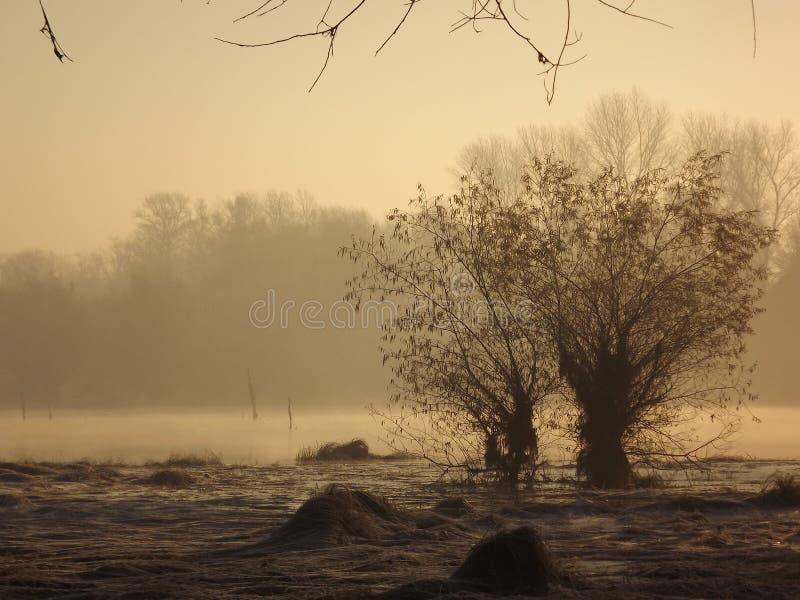 Lake i vinter arkivbilder