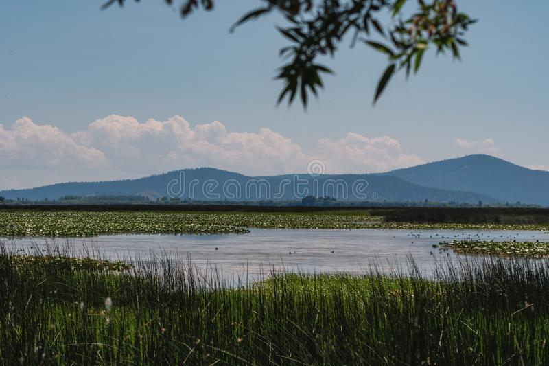 Agency Lake in Southern Oregon near Klamath Falls royalty free stock photo