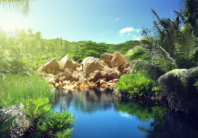 Lake in jungle of Seychelles stock photo