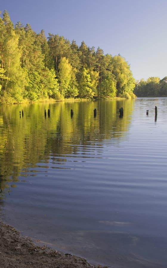 Download Lake landscape stock image. Image of plant, golden, beauty - 26872695