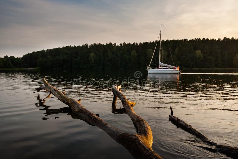 Lake landscape with dead tree royalty free stock image