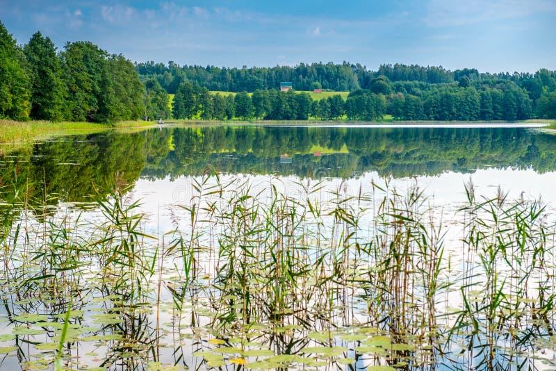 Lake landscape in summer stock image