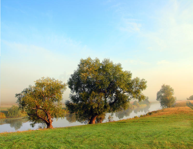 Download Lake Landscape With Trees In Fog Stock Image - Image: 10893007